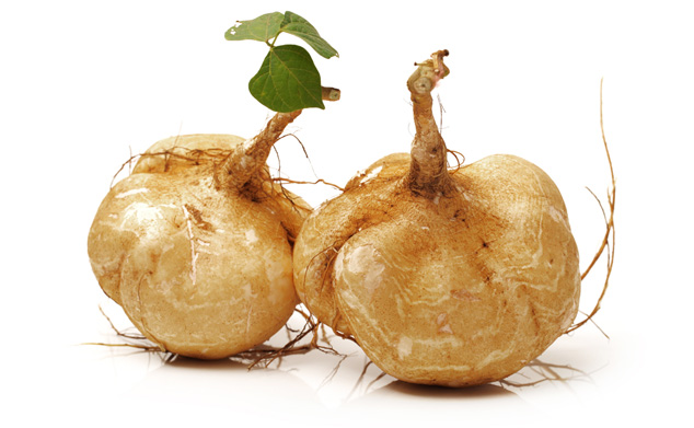 pueraria-mirifica-root